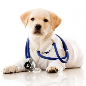 Services | My Pet's Animal Hospital - Lakeland, FL