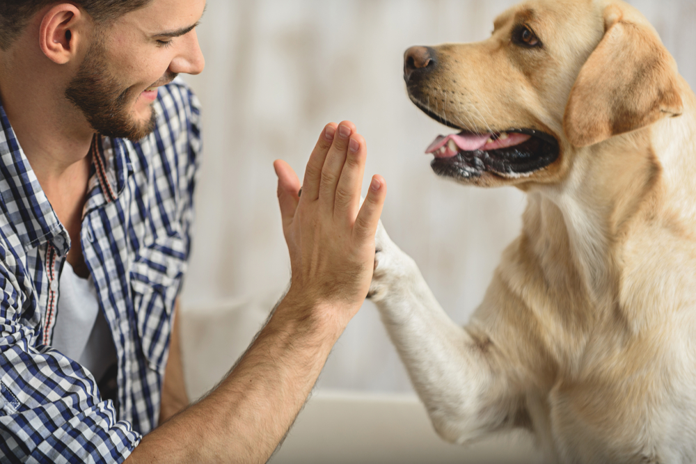 Pet of the Month - My Pets Animal Hospital